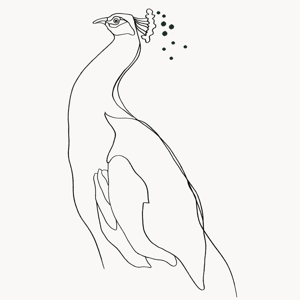 Peacock Montagut