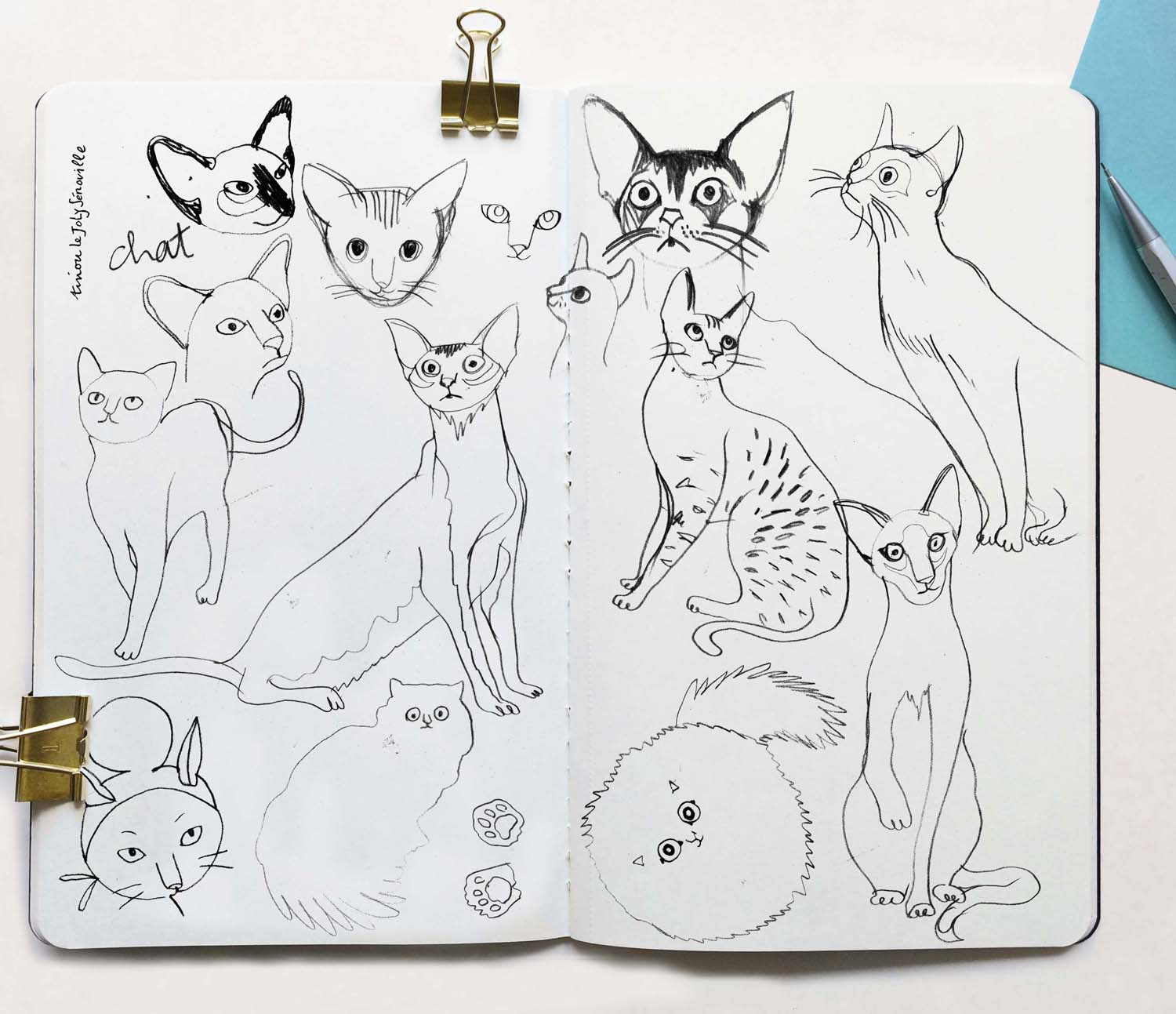 Cats Sketchbook Graphite